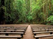 poetry_in_the_redwoods_600